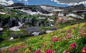 Картинка пейзаж, цветы, горы