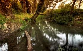 Обои деревья, природа, ручей, весна