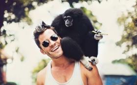 Обои human, touch, animal, natural, monkey, bokeh