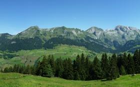 Обои Небо, Природа, Фото, Горы, Трава, Деревья, Лес