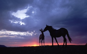 Обои закат, Лошади, небо
