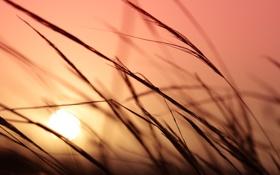 Обои небо, трава, цвета, солнце, макро, закат, растения