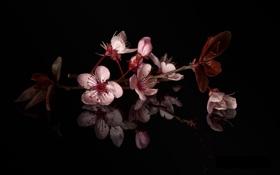 Обои листья, ветка, цветки, цветущая веточка