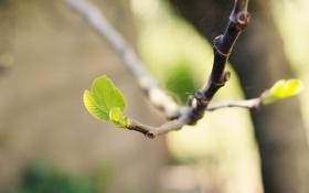 Картинка листья, макро, природа, ростки, паутина, ветка, nature