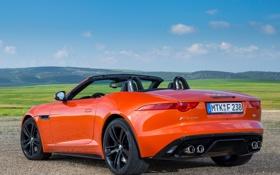 Обои Jaguar, спорткар, кабриолет, вид сзади, F-Type, V8 S