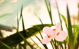 Картинка розовый, зелень, трава, макро