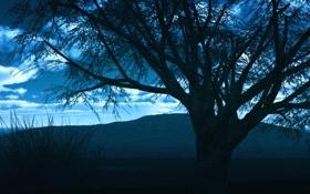 Картинка закат, облака, небо, силуэт, горы, вечер, дерево