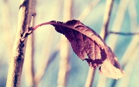 Картинка лист, ветка, сухой, солнечно