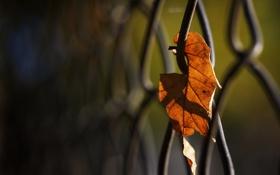 Обои осень, макро, фото, сетка, обои, ограждение, листик
