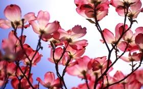 Картинка макро, цветы, природа, фон, розовый