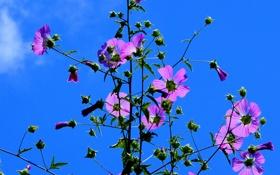 Обои небо, цветы, растение