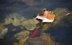 Картинка осень, вода, природа, лист