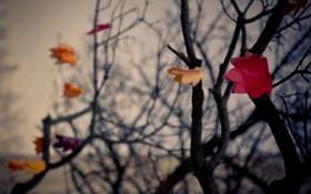 Обои осень, листья, деревья, ветки, бумага, фон, настроение