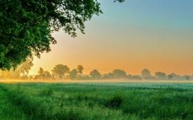 Картинка поле, трава, деревья, туман, луг