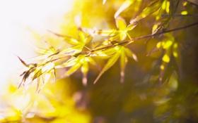 Обои природа, листья, свет, макро