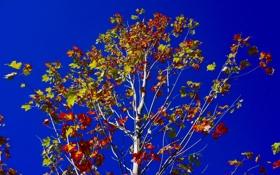 Обои осень, небо, листья, ветки, дерево