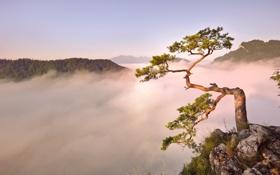 Картинка горы, туман, дерево, рассвет, утро