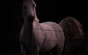 Обои морда, конь, лошадь, изгородь