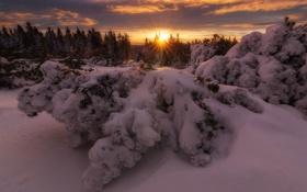 Картинка зима, лес, снег, деревья, закат, природа