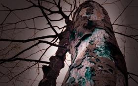 Обои лес, небо, природа, дерево