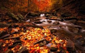 Обои лес, осень, река