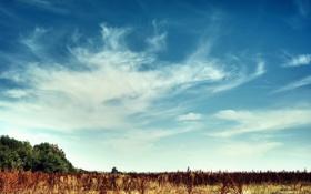 Обои поле, лето, небо, солнце, облака, природа, день