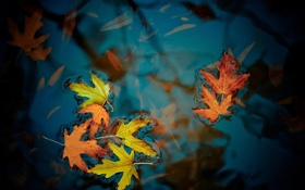 Обои Water, Autumn, Leaves, Maple