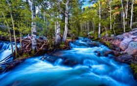 Картинка лес, природа, река, поток, берёзки