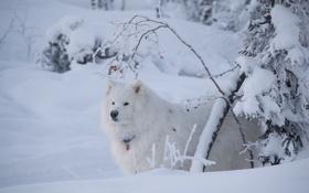 Обои зима, снег, друг, взгляд, собака
