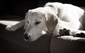 Обои дом, друг, собака