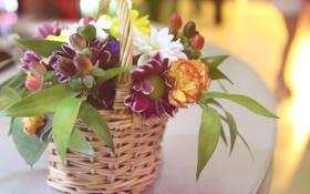 Обои цветы, нежно, корзинка с цветами