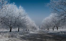 Обои зима, дорога, небо, деревья, Снег, мороз