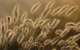Обои трава, капли, макро, роса, липучка