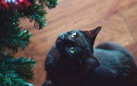 Обои кот, черный, елка, кошка