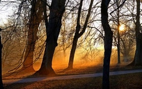 Обои свет, парк, деревья, утро