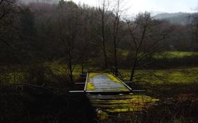 Картинка деревья, мост, туман, слизь