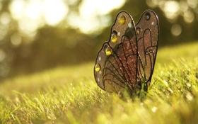 Обои трава, бабочка, украшение