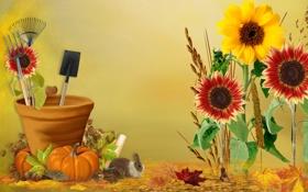 Картинка осень, листья, цветы, коллаж, сад, кролик, урожай