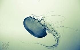 Обои вода, медуза, щупальца