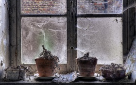Картинка цветы, фон, окно