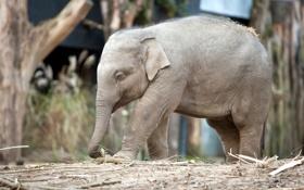 Картинка природа, слон, зоо