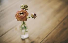 Обои цветок, обои, роза, ваза