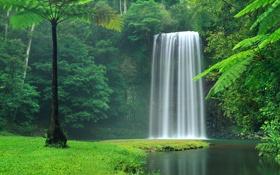 Картинка лес, деревья, водопад, поток, Австралия