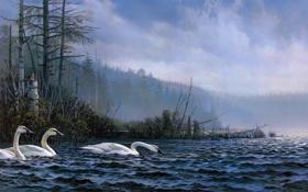 Обои Don Kloetzke, лес, озеро, Swan Lake, птицы, живопись, лебеди