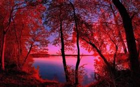 Обои осень, небо, деревья, закат, река, фильтр