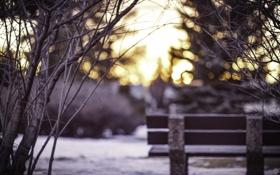 Обои холод, зима, снег, ветки