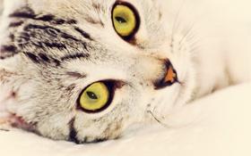 Картинка глаза, кот, взгляд, кошак, киска, котэ