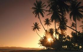 Картинка море, небо, солнце, пейзаж, закат, пальмы, Природа
