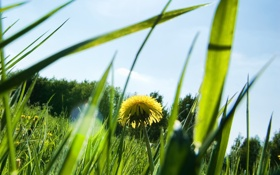 Картинка лето, трава, листья, солнце, макро, лучи, природа