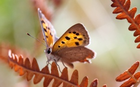 Картинка листья, фон, бабочка, растение
